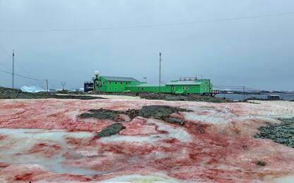 Antartide, la neve si colora di rosso sangue: ecco perché