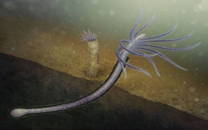 Identificato il primo animale che si è evoluto perdendo parti inutili