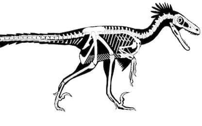 Uno degli ultimi dinosauri era un carnivoro dotato di piume