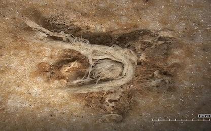 Neanderthal, scoperta la più antica corda: ha 52mila anni