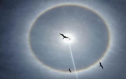 Alone intorno al Sole, il fenomeno ottico osservato nei cieli italiani