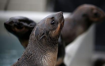 Chiavetta Usb trovata nelle feci di una foca leopardo in Nuova Zelanda