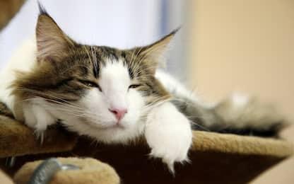 Giornata del Gatto 2019: 5 motivi per cui fa bene averne uno in casa