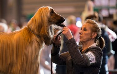 GettyImages-Crufts_Dog_Show_9