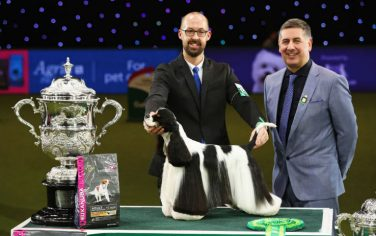 Getty_Images_Cani_Crufts_2017_1