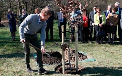 Harry appoggia progetto ambientalista
