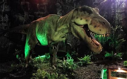 Dinosauri, i vulcani non hanno contribuito alla loro estinzione