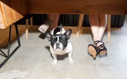 Perché fa bene portare i propri cani al lavoro