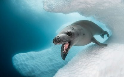 Ocean Art Underwater Photo Competition: le foto