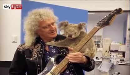 Australia, Brian May suona con un koala sulla spalla. VIDEO