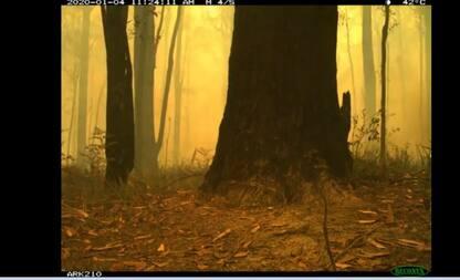 Incendi Australia, il timelapse della distruzione delle foreste. VIDEO