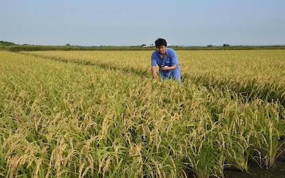 Agricoltura, vola il biologico in Italia: +20% nel 2016
