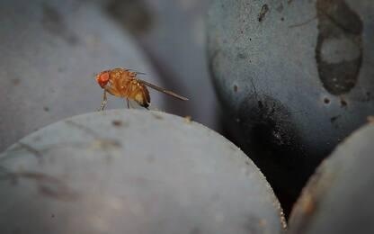 Dal Politecnico di Losanna robot a sei zampe più veloci degli insetti