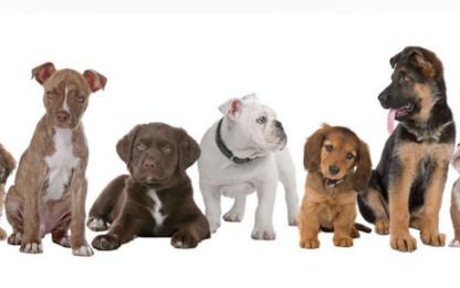 Amazon apre un negozio dedicato agli animali con 180mila prodotti