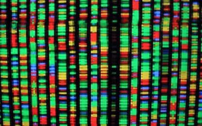 Le gemelle con Dna modificato hanno un rischio di mortalità più alto