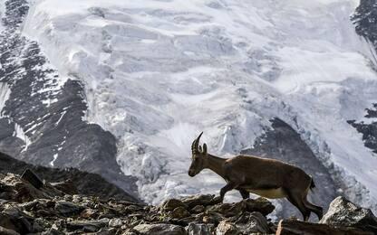 Il 92% dei ghiacciai alpini rischia di scomparire entro il 2100