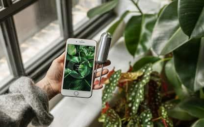 FYTA Beam, il sensore intelligente che dà voce alle piante