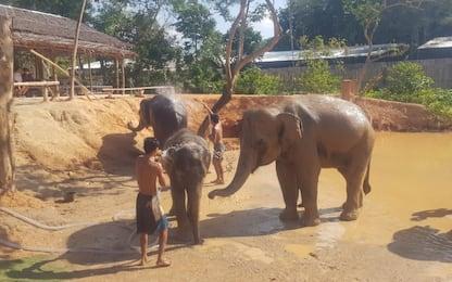 Turismo eco-sostenibile, bagni e fanghi con gli elefanti in Thailandia