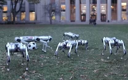 Usa, presentati in Massachusetts nove mini ghepardi robot. VIDEO