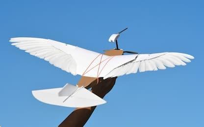 PigeonBot, il primo drone con piume che vola come un piccione