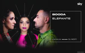 Elefante, l'inedito dei Booda